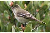 Patagonian Birds